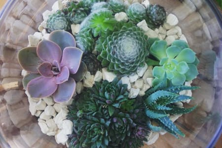 Build your own Terrarium Workshop