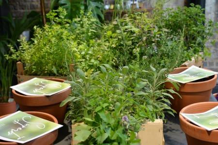 Festive Superb Herbs Masterclass