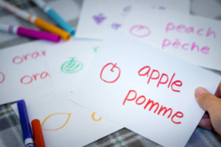 French Evening Class: Beginner Level