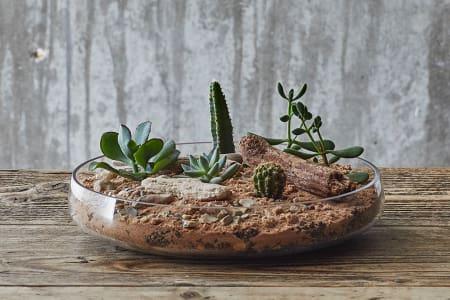 Leafage Succulent & Cactus Terrarium Workshop