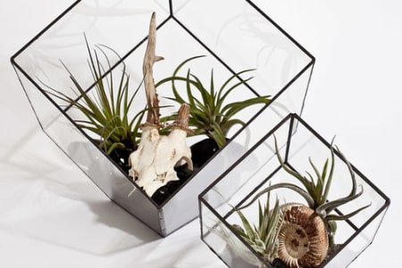 Private Class: Make Your Own Copper Foil Terrarium