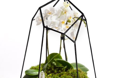 Private Class: Learn to Grow Orchids Behind Glass