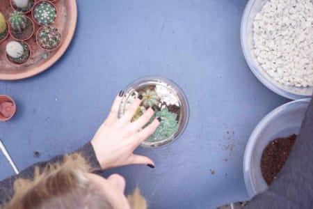 Create a Cactus & Succulent Terrarium