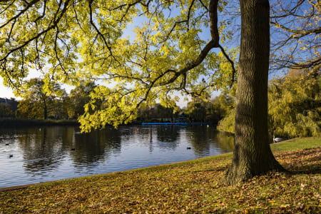 Ultimate Introduction to Photography: Regent's Park in Autumn, London