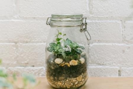 Build Your Own Jar Terrarium