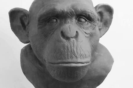 Sculpting Primates