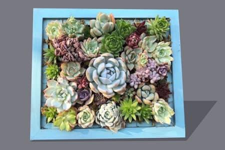 Succulent Picture Frame Masterclass