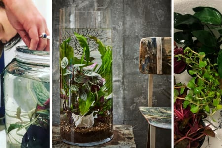 Private Class: Plant Your Own Aquatic Landscape