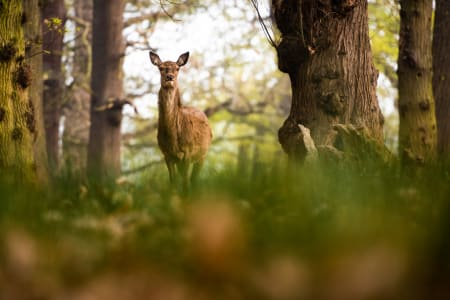 Learn wildlife and landscape photography in Richmond Park at sunrise or sunset