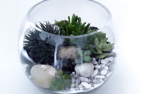 Open Terrarium Workshop