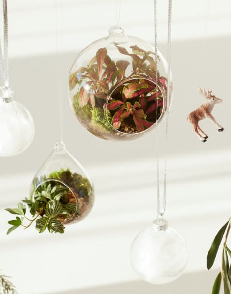 Leafage Demijohn & Christmas Bauble Terrarium Workshop by Leafage - crafts in London