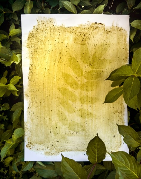 Botanical Printmaking with plant's juices by Magda Kuca Alternative Photography - art in London