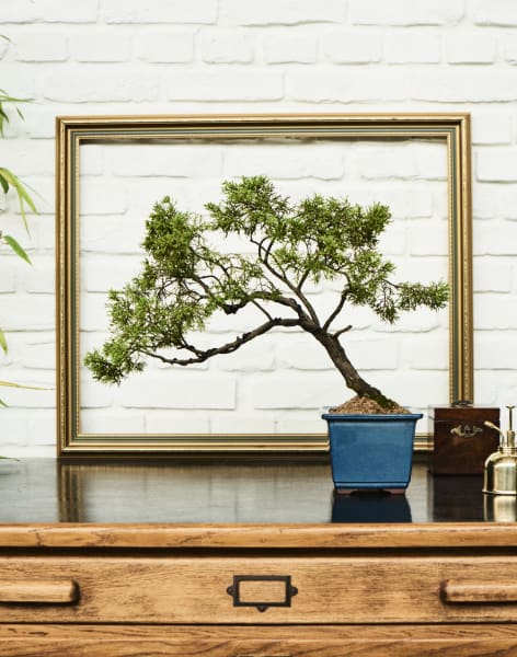 Private Class: Bespoke Bonsai Class by Alyson Mowat Studio - crafts in London