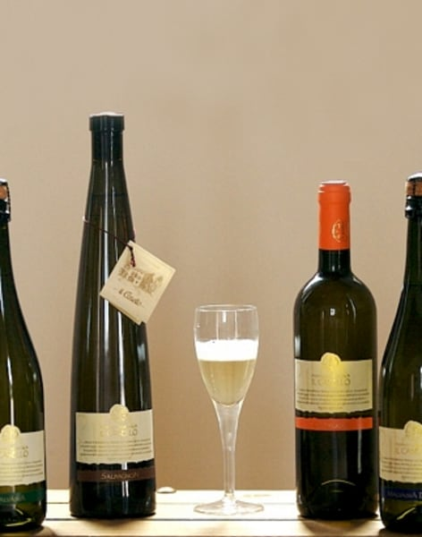 Wine Tasting with Cheese: Kensington by Dionysius Importers - drinks-and-tastings in London