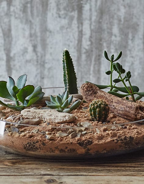 Leafage Succulent & Cactus Terrarium Workshop by Leafage - crafts in London