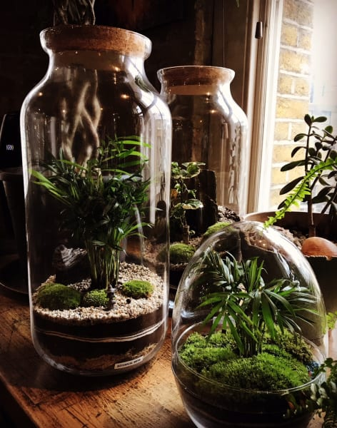 Terrarium Masterclass  by Botanical Boys - crafts in London