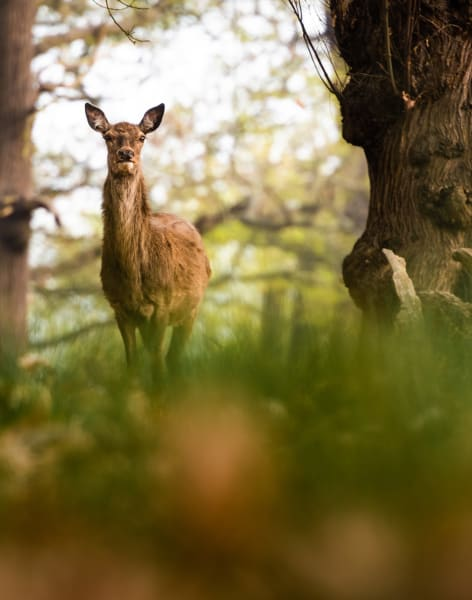 Learn Wildlife and Landscape Photography in Richmond Park at Sunrise or Sunset by Matthew Williams-Ellis - photography in London
