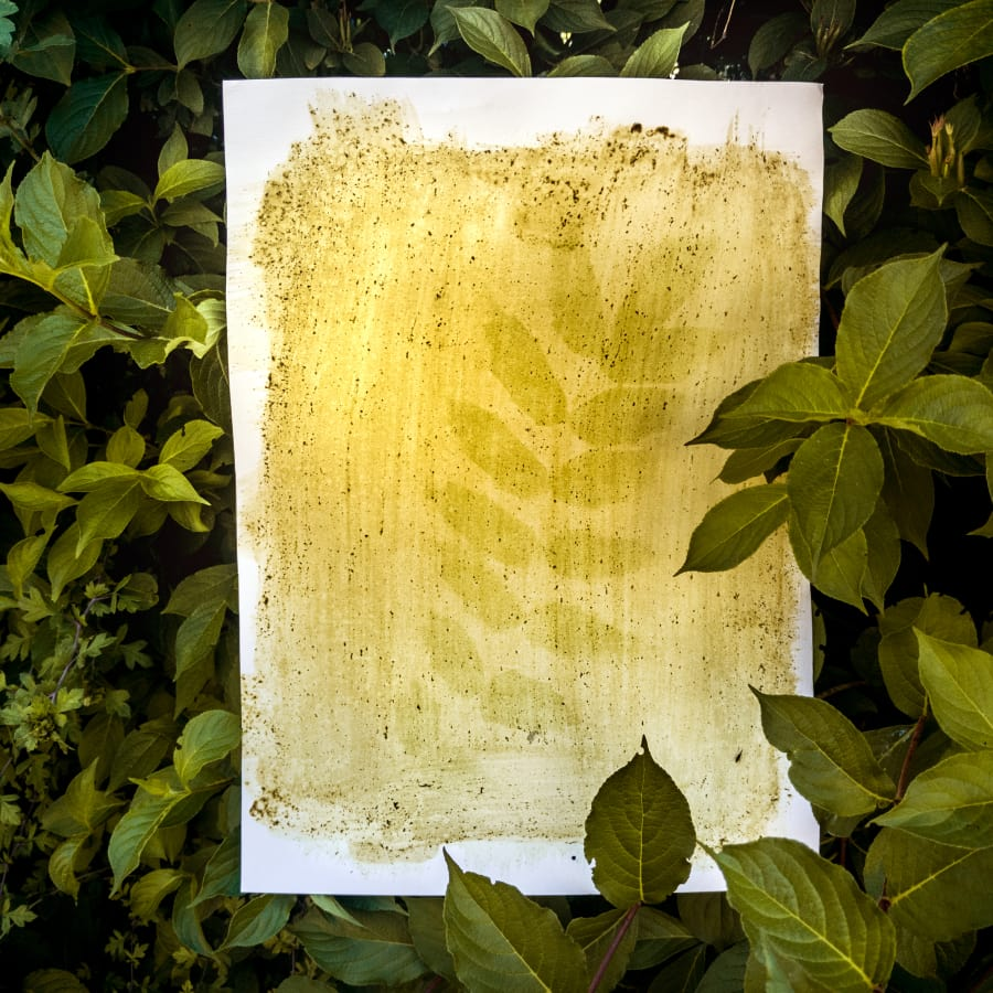 Botanical Printmaking with plant's juices by Magda Kuca Photography - art in London