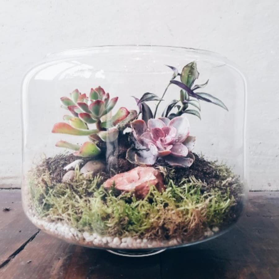 Terrarium Tuesday Workshop by Grace & Thorn - crafts in London