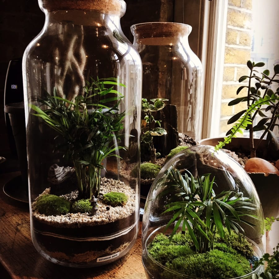 Terrarium Masterclass - Bible Factory Studio! by Botanical Boys - crafts in London