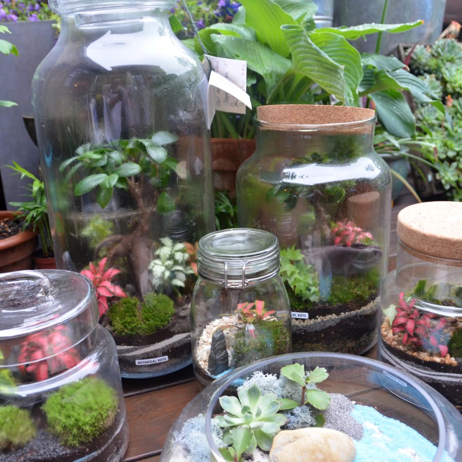 Terrarium Masterclass - Handcraft an Eco-System by Botanical Boys - crafts in London