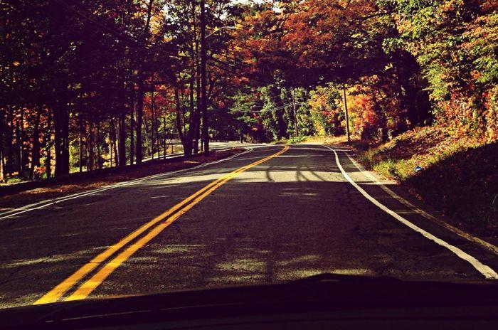 En bilvei med høstlige trær rundt