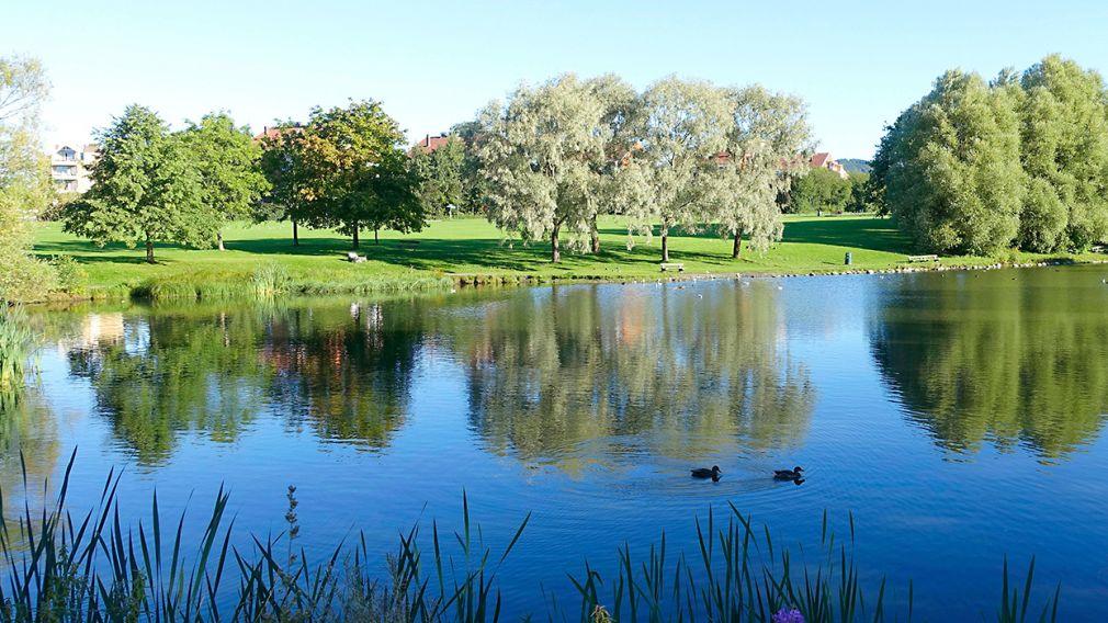 Hovindammen med stille vann og frodig grøntområde
