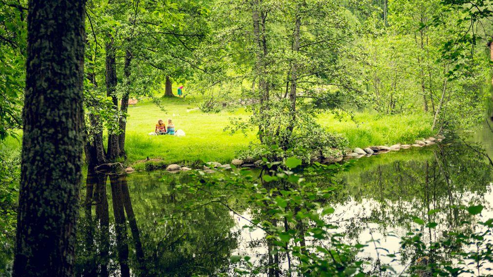 Badevann og grøntområder med trær