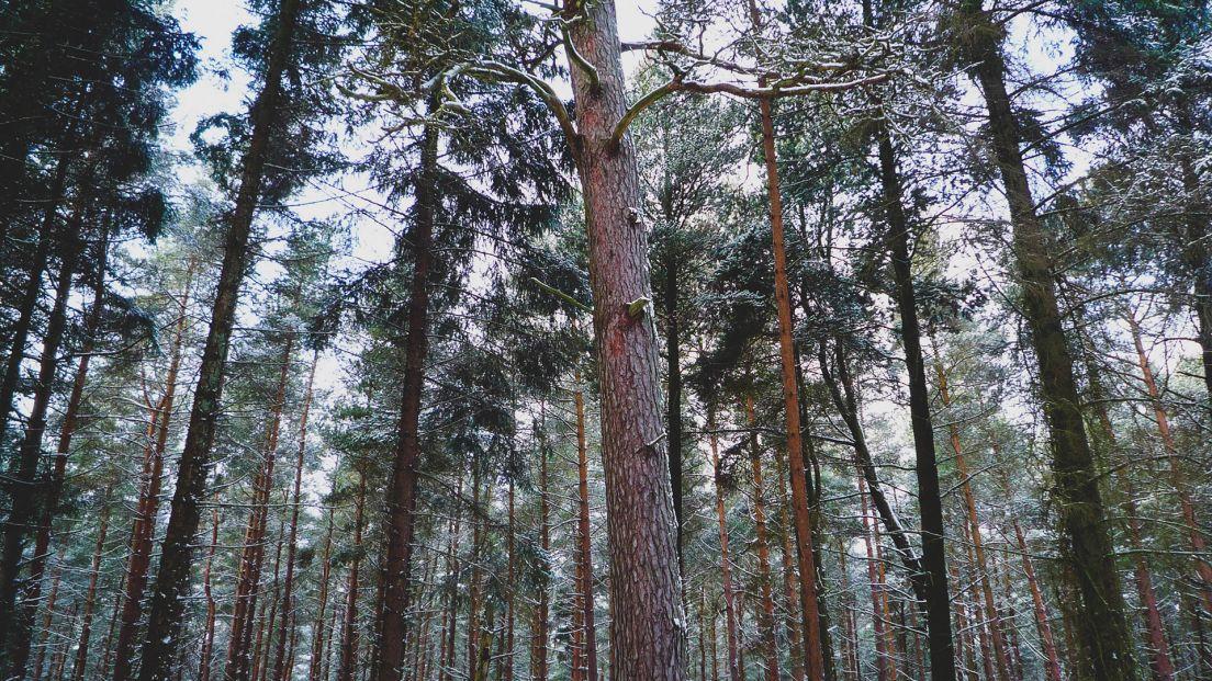 Skog i Länna utanför Stockholm