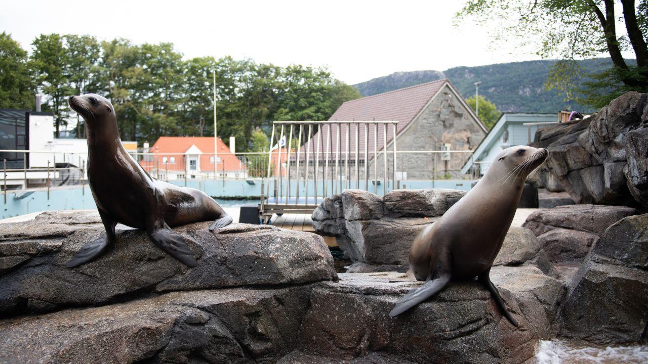 To sjøløver