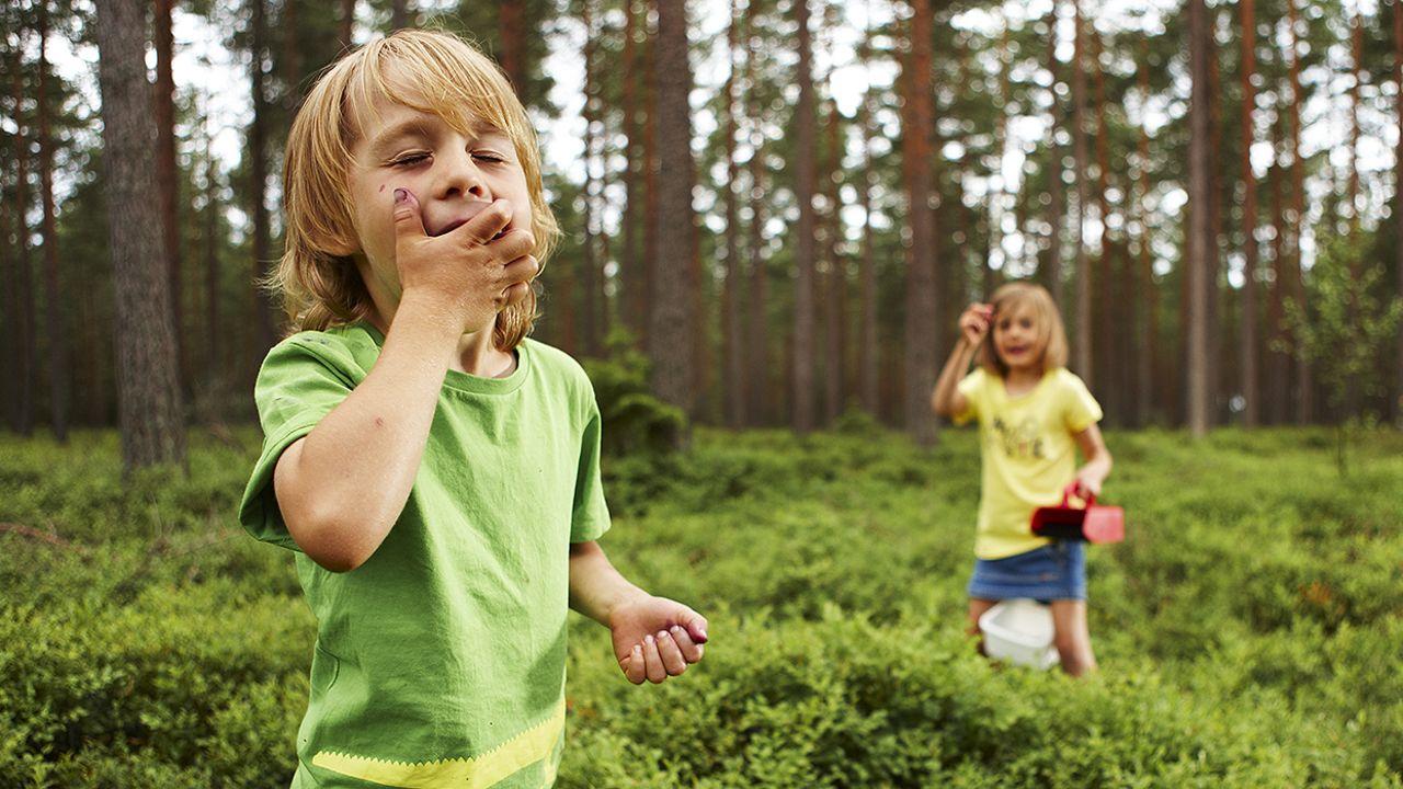 barn i skogen på blåbærtur