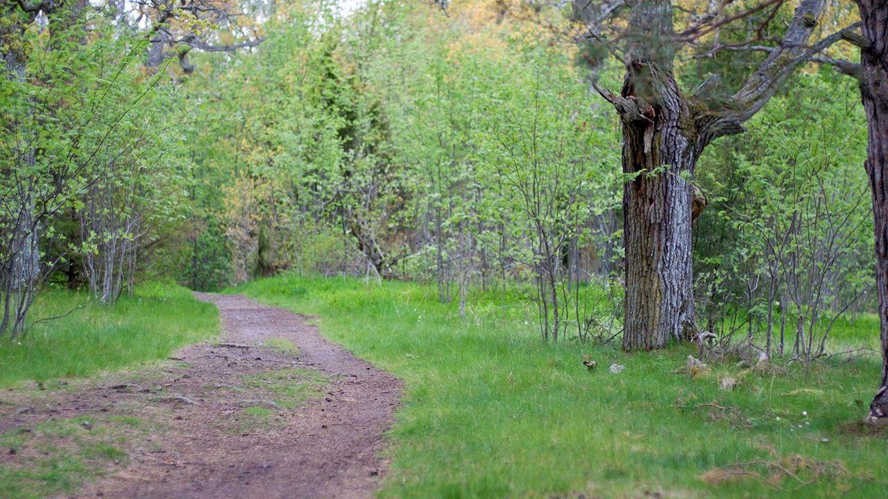 stig i en skog
