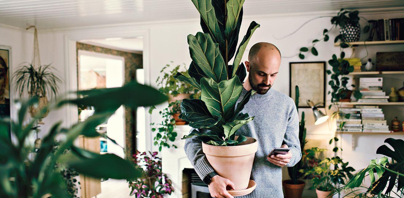 Bilde av en mann som ser på mobilen som mens han bærer på en stor potteplante i en leilighet med mange planter.