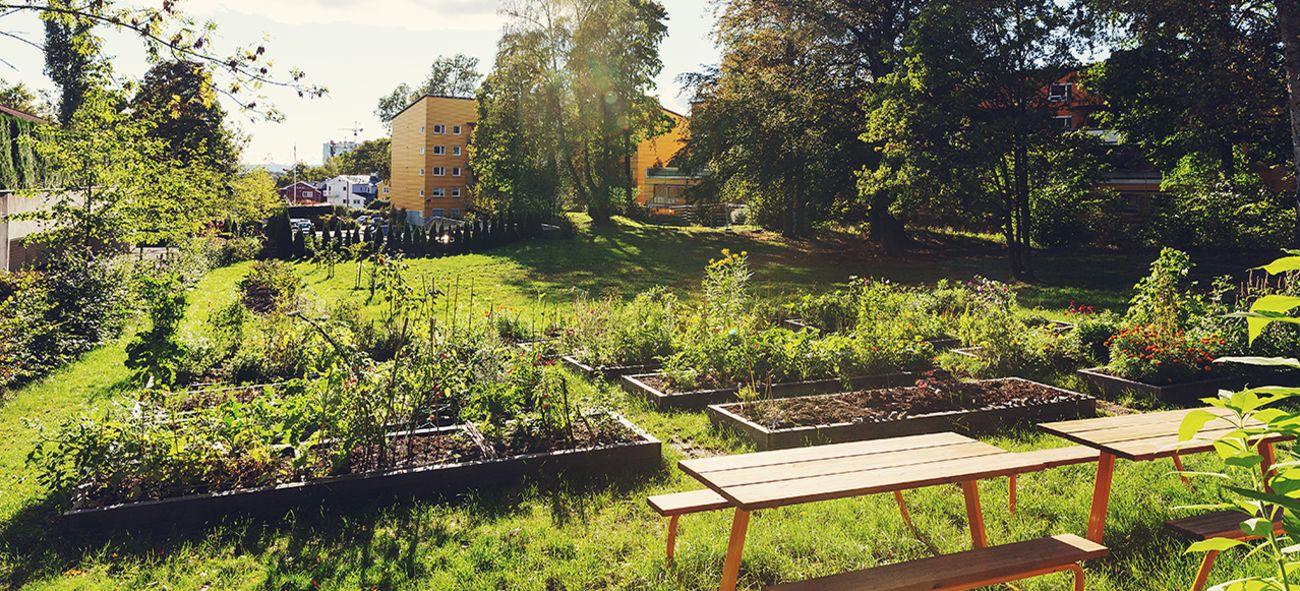 Viser plantekasser med ulike blomster og grønnsaker i Casinetto i Oslo