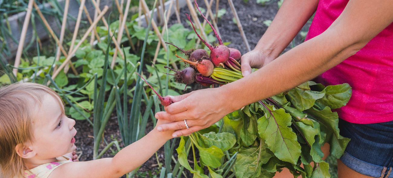 En flicka plockar rädisor i en trädgård