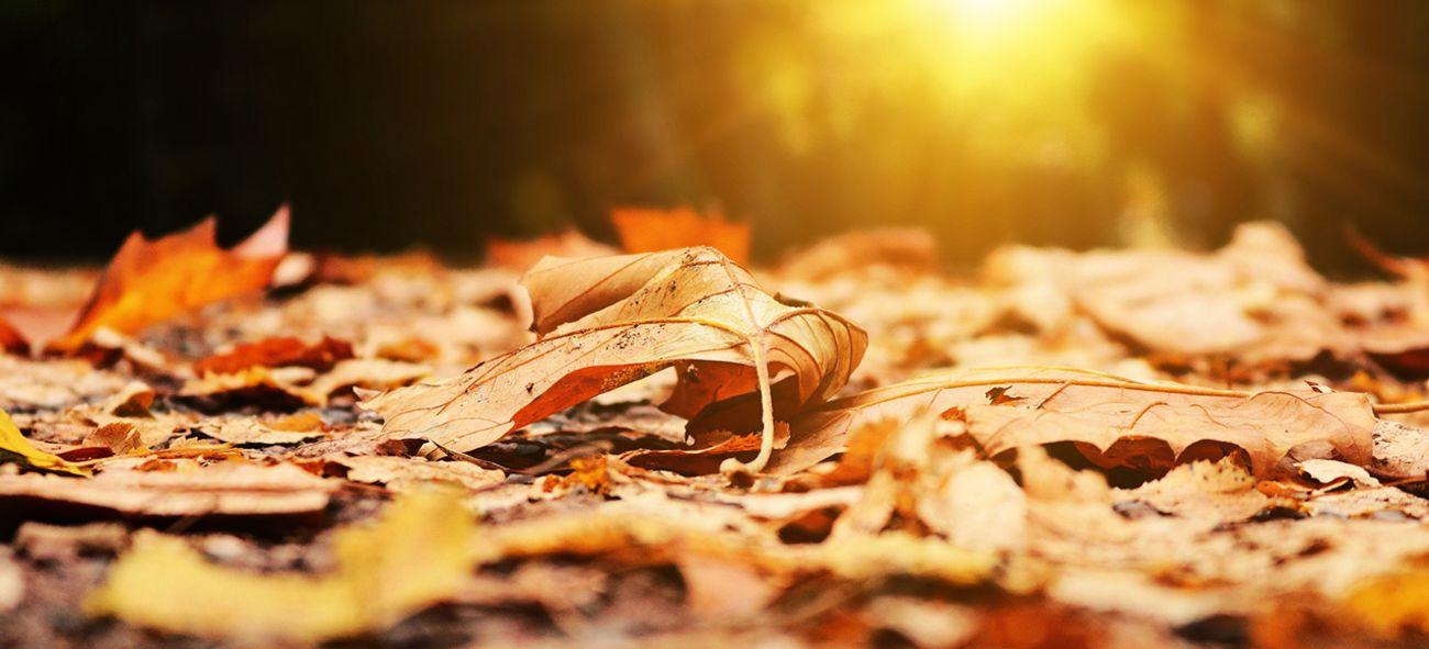 Blader som har fallt og ligger på bakken med solen som går ned i bakgrunnen