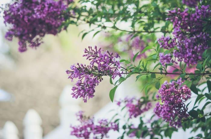 Jobben med å planlegge hage og uteområde kan du gjøre selv, eller du kan ansette en landskapsarkitekt som kan hjelpe deg på vei.