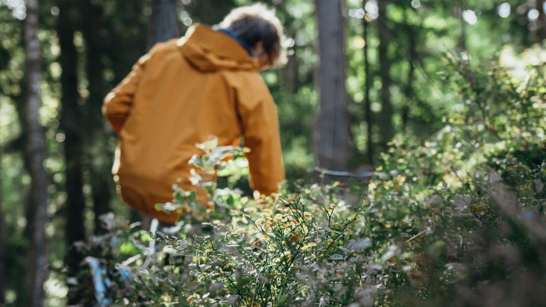 En man som plockar blåbär i skogen