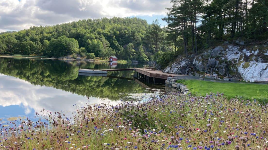 Bilde av badeplass i nærområdet vann, brygge sommerblomster