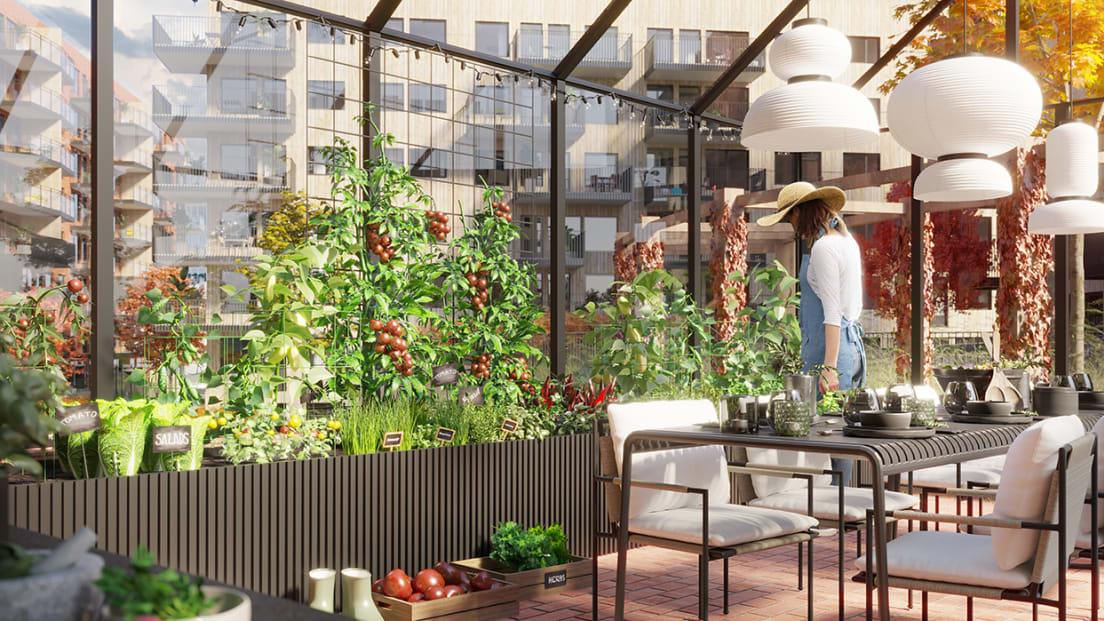 Illustrasjon av drivhus med grønnsakshage i bakgård i Løren botaniske på sommeren.