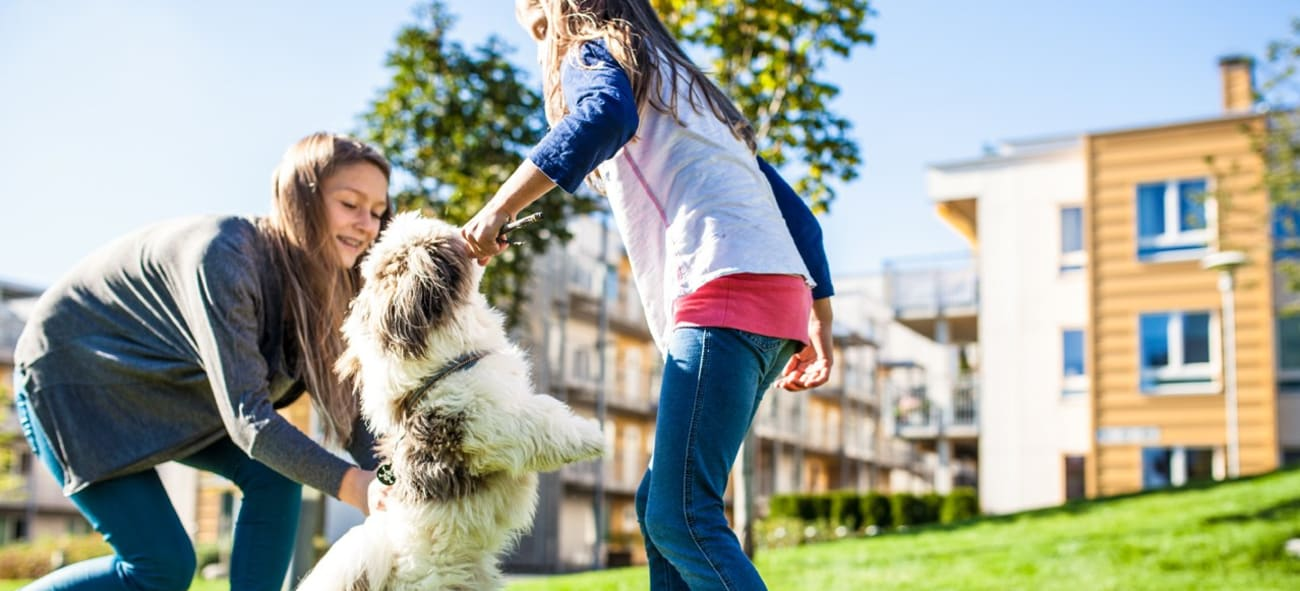 To tenåringsjenter leker med en hund på gressplenen utenfor boligblokker.
