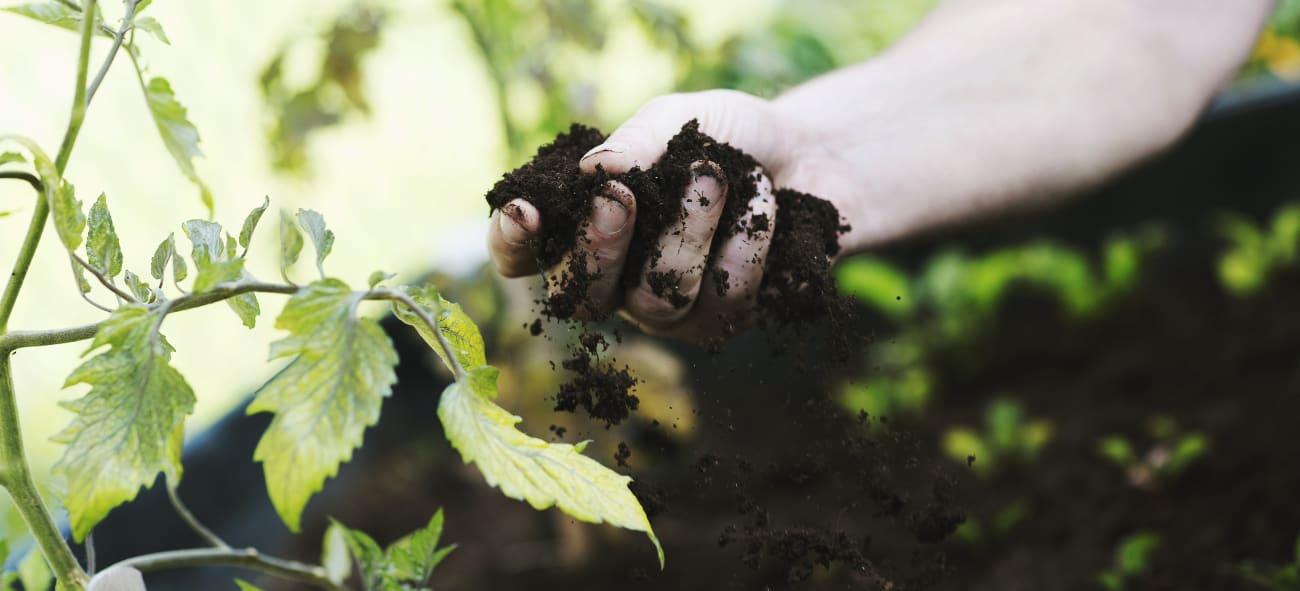 Hånd som plukker opp jord fra et bed med grønnsaker. Foto: Nadia Frantsen
