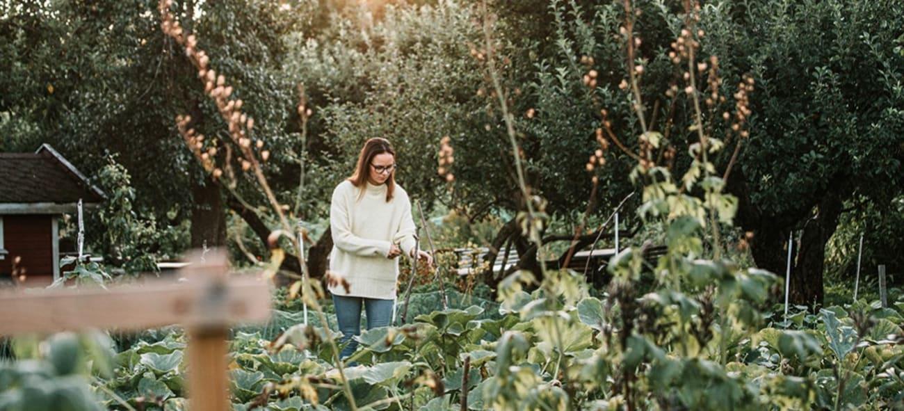 kvinne dyrker planter og grønnsaker i hage