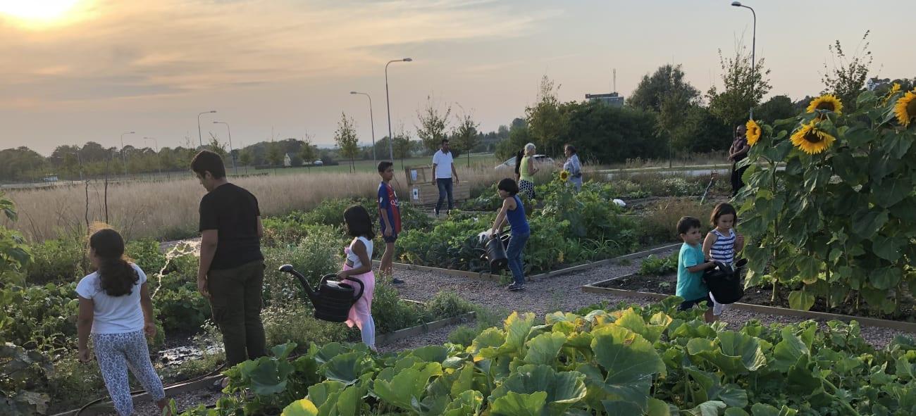 en familj vattnar sina grödor i ett odlingsland