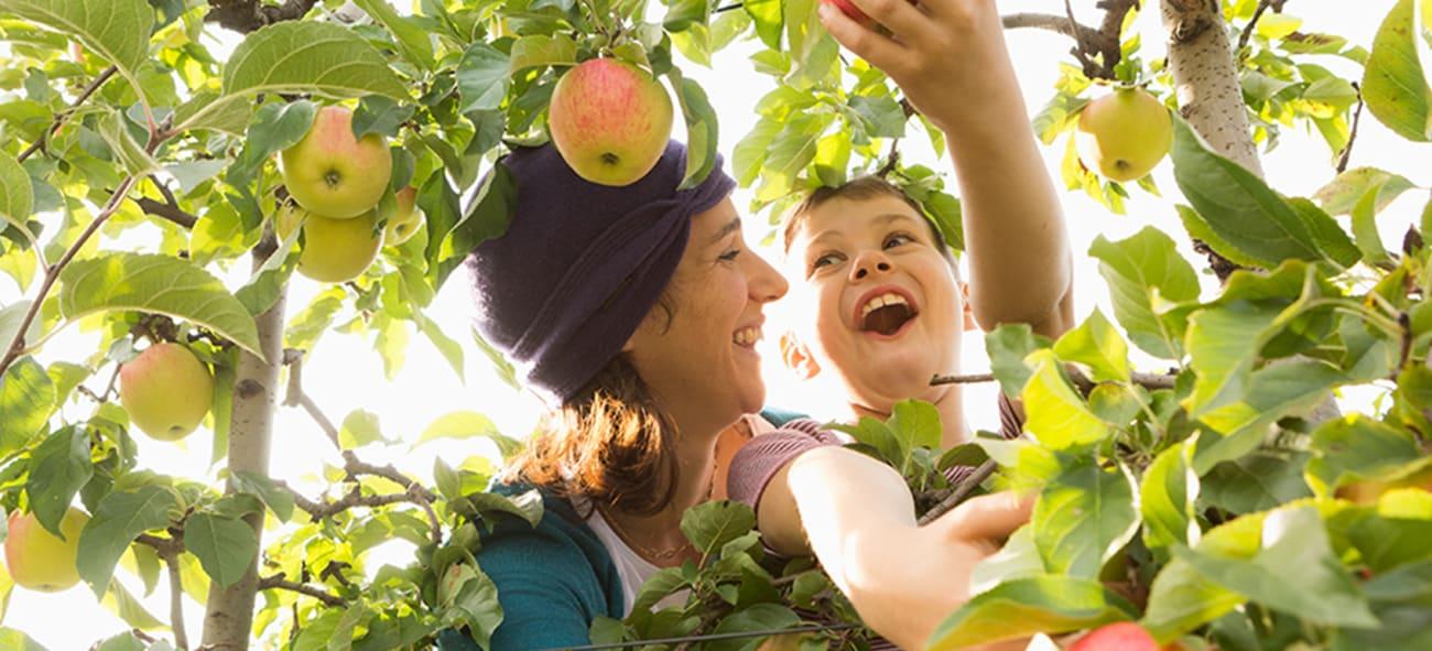 Fotografi av en mor og datter som klatrer i et epletre.