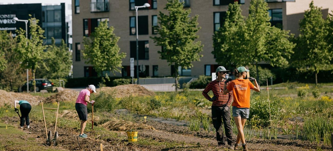 Fotografi av beboere på Fornebu som høster grønnsaker