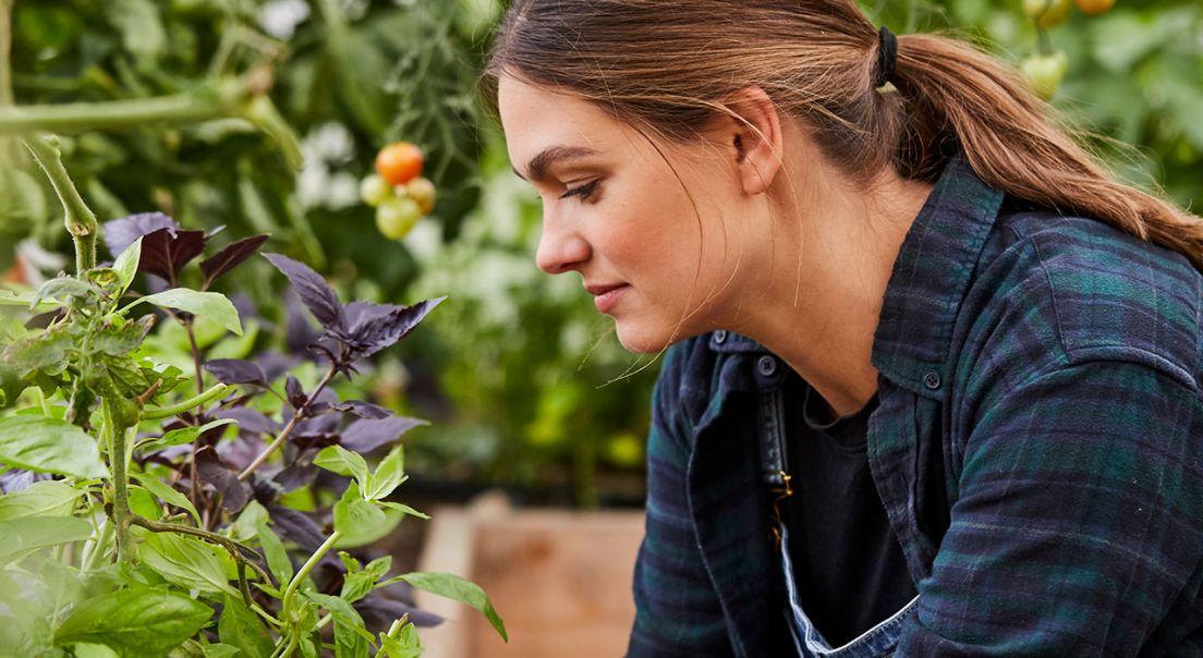 person ser på planter