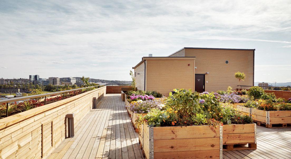 Stor takterrasse på Ulven med fulle plantekasser.