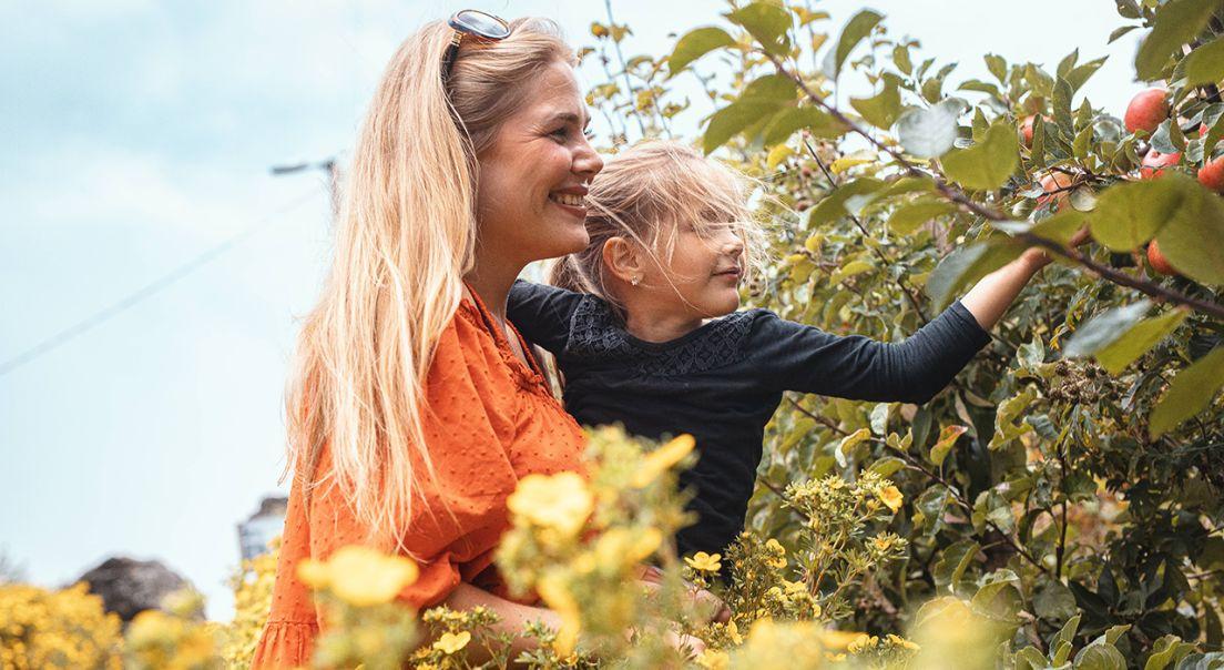 Mor og ung datter plukker epler fra epletre