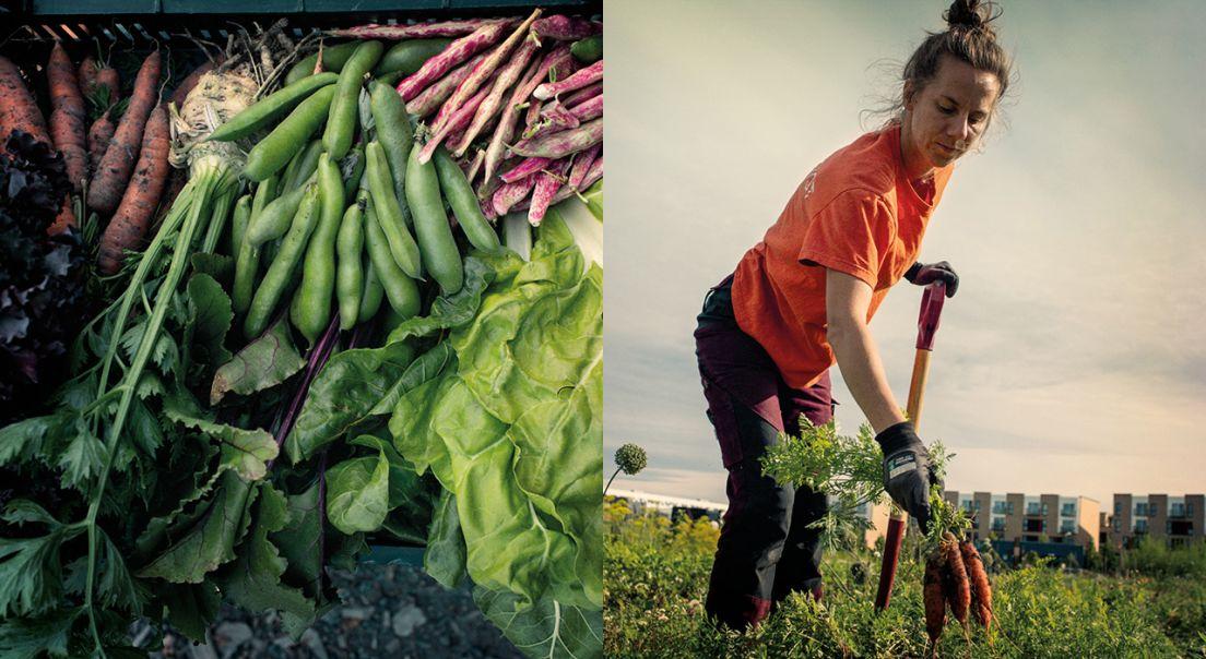 Todelt foto som viser grønnsaker på den ene siden og en kvinne i en åker på den andre.